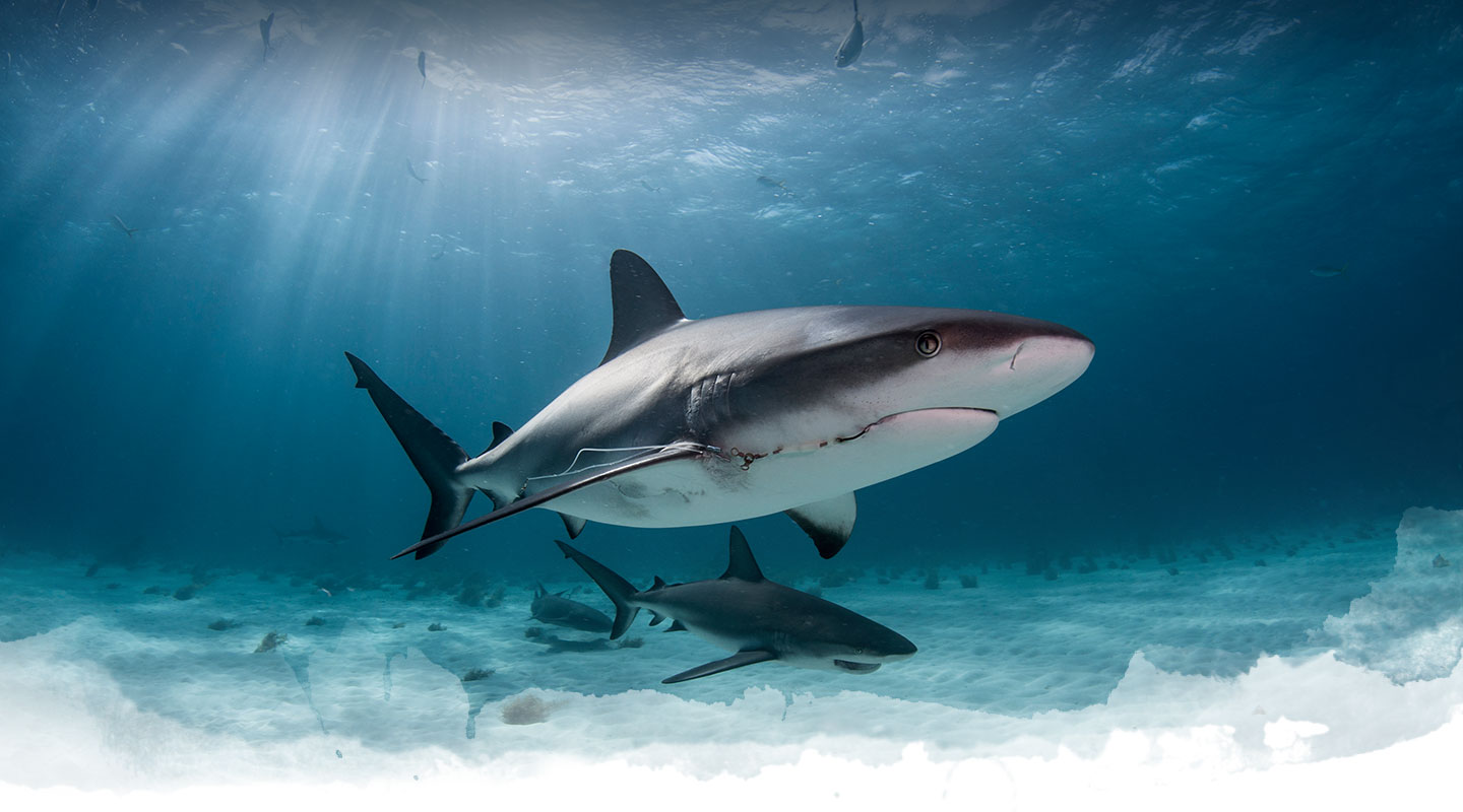 Fin and fly shark fishing charters in florida for for Shark fishing charters